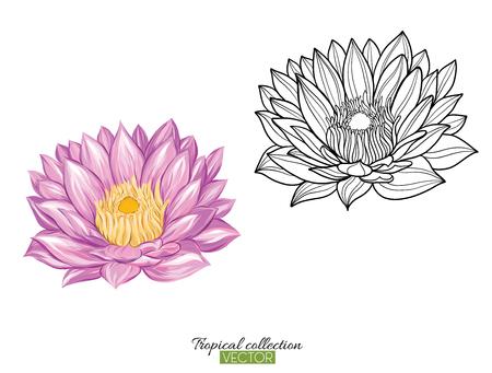 Tropische plant collectie vectorillustratie geïsoleerd op wit