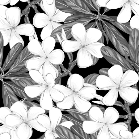 Seamless pattern, hand-drawn background with white plumeria Archivio Fotografico - 107237764