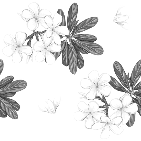 Seamless pattern, background with white plumeria on white background. Archivio Fotografico - 107237765