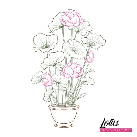 Lotus Flower in pot. Botanical illustration style. Stock vector illustration.  Illustration