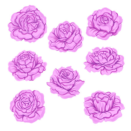 Pink roses set isolated on white background. Hand drawn colorful vector illustration without transparent and gradients. Illustration