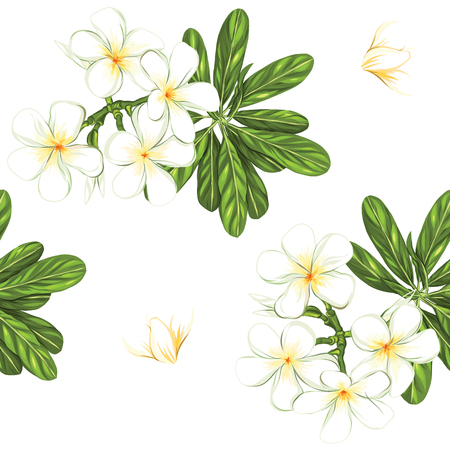 Seamless pattern, background with white plumeria on white background. Hand drawn colorful vector illustration without transparent and gradients. Illustration