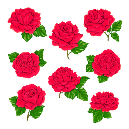 Red roses set isolated on white background. Hand drawn colorful vector illustration without transparent and gradients.