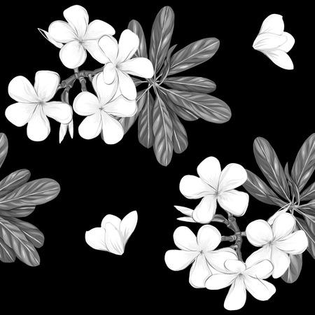 Seamless pattern, Hand drawn background with white plumeria Ilustração