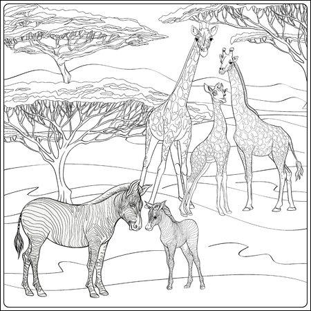 Sfondo con giraffe e zebre. Schema disegno a mano. Buono per colorare la pagina per il libro da colorare per adulti .. Illustrazione vettoriale. Vettoriali