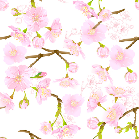 Seamless pattern, background with blooming cherry japanese sakura in soft rose pink colors. Stock vector illustration. Isolated on white background. Colored and outline pattern.