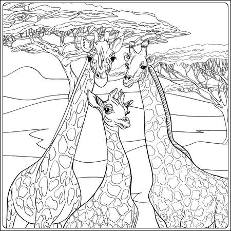 Fondo con familia de jirafas. Esquema de dibujo a mano. Bueno para colorear página para el libro de colorear para adultos .. Ilustración vectorial.