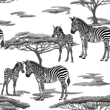 Seamless pattern, background  with adult zebra  and zebra cub. Vector illustration. Illustration