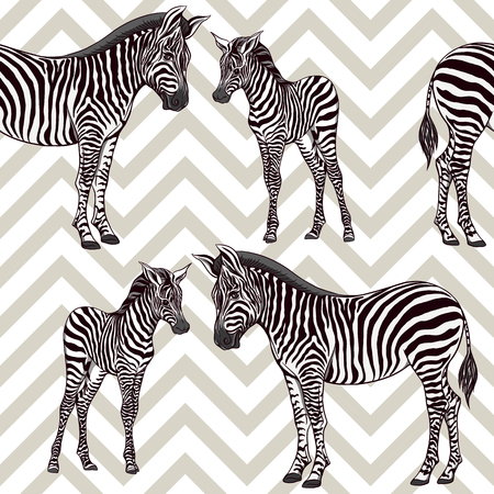Seamless pattern, background  with adult zebra  and zebra cub. Vector illustration.  イラスト・ベクター素材