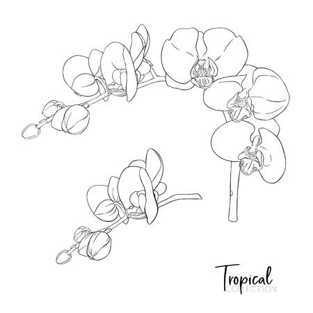 Planta tropical. Ilustración de vector de estilo botánico.