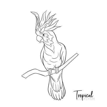 Loro cacatúa. Pájaro tropical. Ilustración de vector de dibujo de contorno