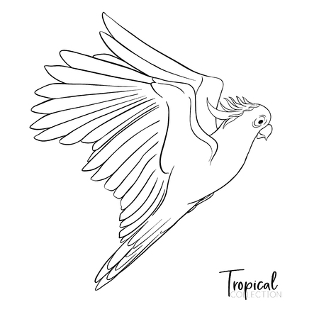 Cockatoo parrot. Tropical bird. Outline drawing vector illustration Ilustração