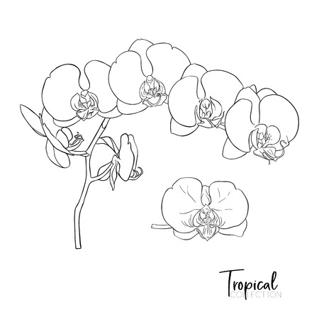 Tropical plant. Vector illustration in botanical style. Banco de Imagens - 107699534