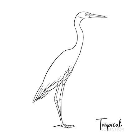 Tropische vogel. Vector illustratie. Stockfoto