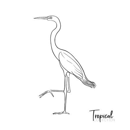 Tropical bird. Vector illustration.