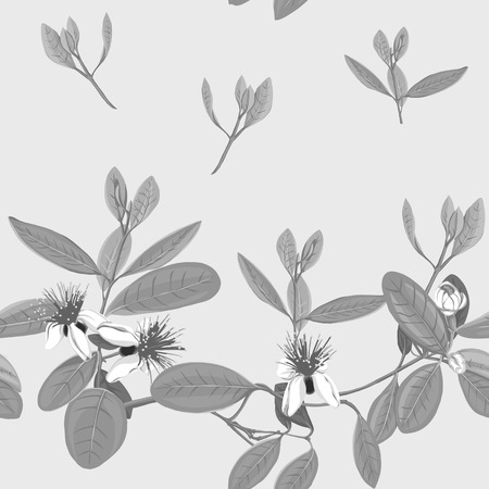 Seamless pattern, background with floral pattern with feijoa blooming flowers. Vector illustration without gradients and transparency.  In monochrome gray colors 向量圖像