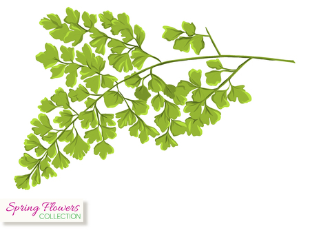 Spring flower branch. Colorful realistic vector illustration. Isolated on white background. Vector Illustration