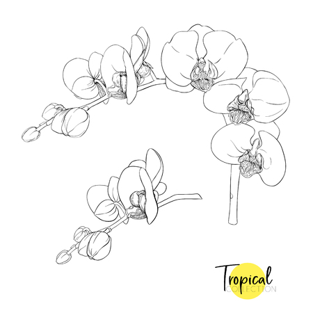 White orchid flower. Tropical plant. Graphic drawing, engraving style. vector illustration 版權商用圖片 - 110222191