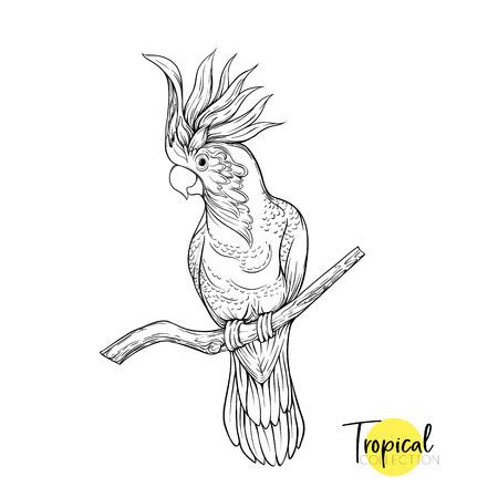 Loro cacatúa. Pájaro tropical. Dibujo gráfico, ilustración de vector de estilo de grabado