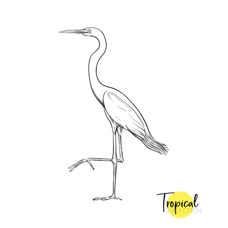 Tropical bird. Graphic drawing, engraving style vector illustration Illustration