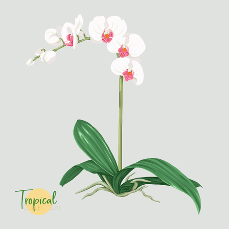 Tropical plant. Vector illustration in botanical style.