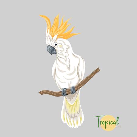 Tropikalny ptak. Ilustracji wektorowych.