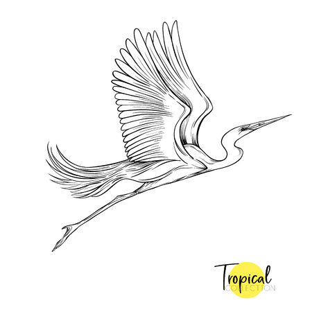 Tropical bird. Vector illustration.