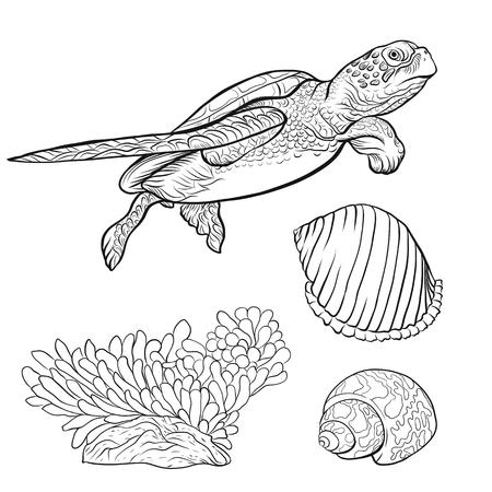 Colección Sea. Dibujado a mano original. Ilustración de vector. Esquema de dibujo a mano. Aislado sobre fondo blanco. Ilustración de vector