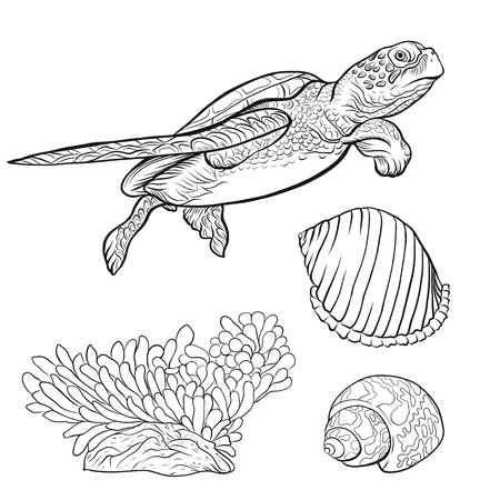 Collezione mare. Disegnato a mano originale. Illustrazione vettoriale. Schema disegno a mano. Isolato su sfondo bianco. Vettoriali