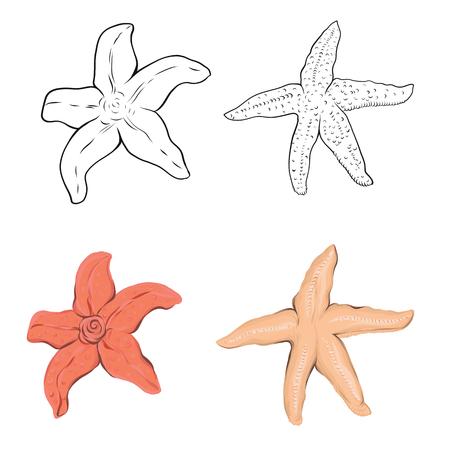 Colección de estrellas de mar. Dibujado a mano original. Ilustración de vector. Esquema de dibujo a mano. Aislado sobre fondo blanco. Aislado sobre fondo blanco. Aislado sobre fondo blanco.