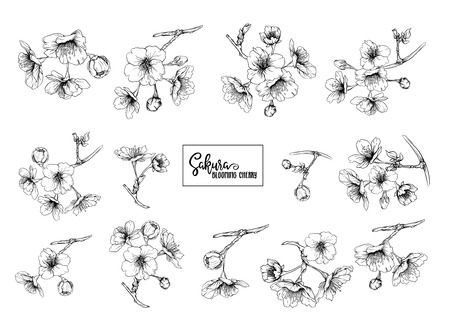 Set of blooming cherry japanese sakura. Stock vector illustration. Isolated on white background. Outline drawing.