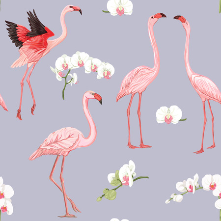 Seamless pattern, background with tropical birds. flamingo  and orchid flower. Colored and outline design on soft grey background.. Vector illustration.