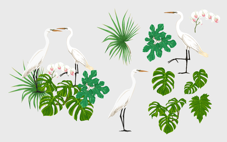 Set of elements for design with tropical plants, palm leaves, monsters, orchids and white heron birds.  Colored vector illustration.  イラスト・ベクター素材