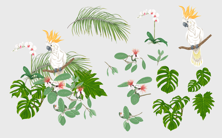 Set of elements for design with tropical plants, palm leaves, monsters, orchids and cockatoo parrot.  Colored vector illustration. Foto de archivo - 110985035