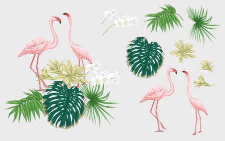 Set of elements for design with tropical plants, palm leaves, monsters, orchids and flamingo birds.  Colored vector illustration. Foto de archivo - 110985041