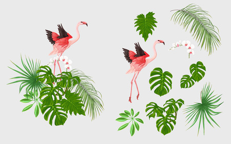 Set of elements for design with tropical plants, palm leaves, monsters, orchids and flamingo birds.  Colored vector illustration.