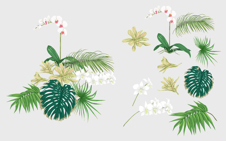 Set of elements for design with tropical plants, palm leaves, monsters, orchids.  Colored vector illustration.