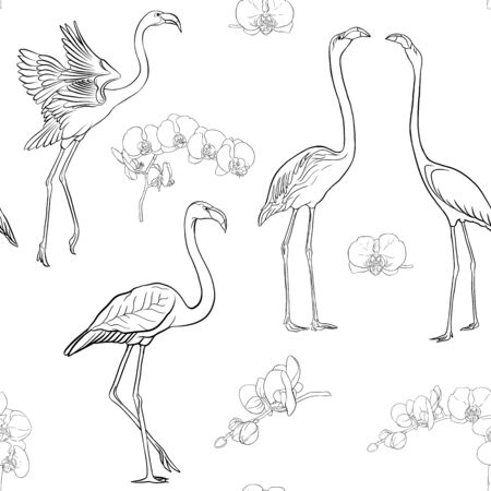 Seamless pattern, background with tropical birds. flamingo and orchid flower. Outline hand drawing vector illustration.
