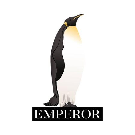 Manchots empereurs avec slogan. Illustration vectorielle.