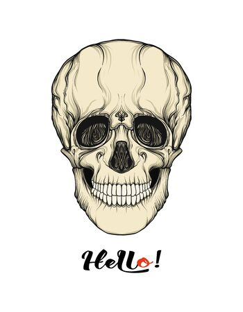 Human Skull  with hello slogan.  Good for print on T-shirts, bags, covers.  Vector illustration. Ilustração