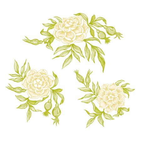 Roses Element for design. Graphic drawing, engraving style.  In art nouveau style, vintage, old, retro style.. Illustration