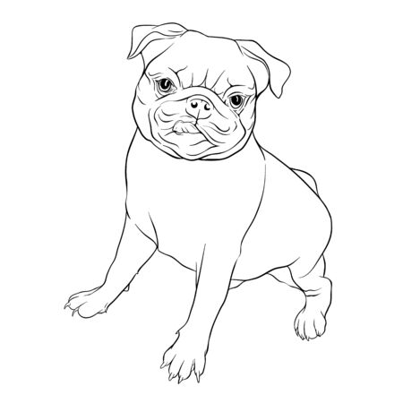 Set of pug dogs. Outline hand drawing vector illustration. Isolated on white background. Vectores