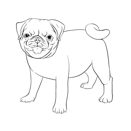 Set of pug dogs. Outline hand drawing vector illustration. Isolated on white background. Stock Illustratie
