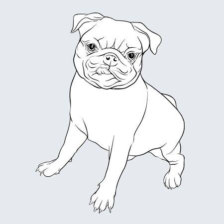 set of pug dogs vector illustration. Outline hand drawing.