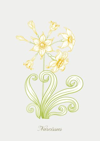 Narcissus. Set of elements for design Colored outline hand drawing vector illustration. In art nouveau style, vintage, old, retro style. In soft yellow colors..