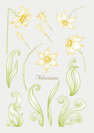 Narcyz. Zestaw elementów do projektowania Kolorowy kontur ręcznie rysowania ilustracji wektorowych. W stylu secesyjnym, vintage, starym, retro. W delikatnych żółtych kolorach..