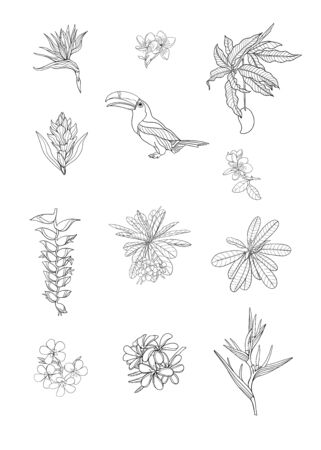 Set of tropical plans, flowers and birds. Stickers, elements for design. Outline hand drawing vector illustration. Isolated on white background. Illustration