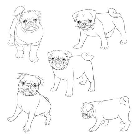 Set of pug dogs. Outline hand drawing vector illustration. Isolated on white background.