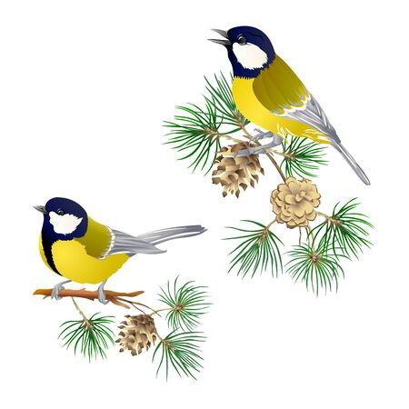 Pájaro tit: un símbolo del invierno. Corona de Navidad de plantas de invierno. Elemento de diseño. Ilustración de vector de color. Aislado sobre fondo blanco. Ilustración de vector