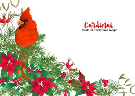 Cardinal bird and Christmas wreath of spruce, pine, poinsettia Template for card, banner, gift voucher, label. Colored vector illustration Ilustração
